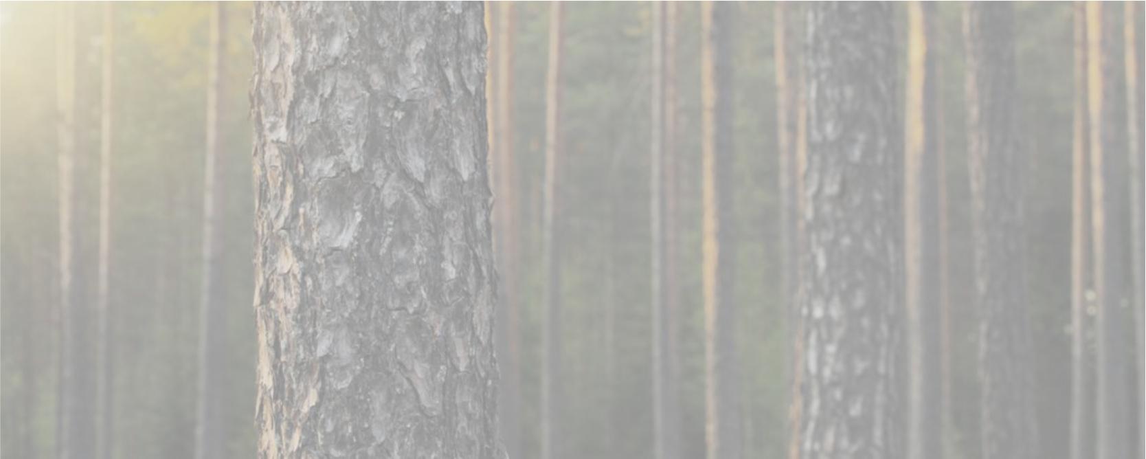 Дома HONKA строятся из 100% финской сосны.