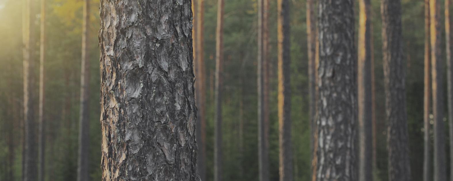 Строительство безопасных и экологичных деревянных домов HONKA